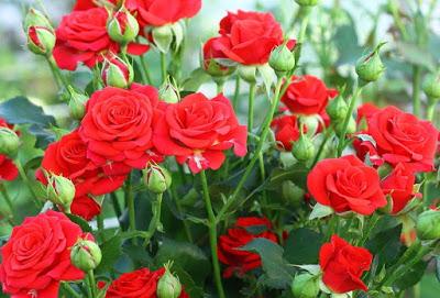 Маски для лица из лепестков роз