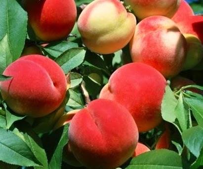 Персик поможет сбросить лишний вес